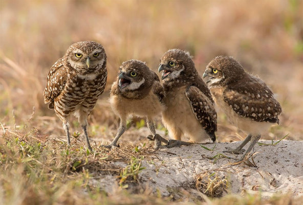 Comedy Wildlife Photography
