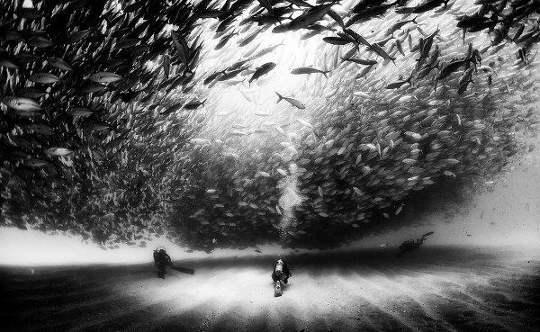 Жизнь под водой от фотографа Ануара Патьяне