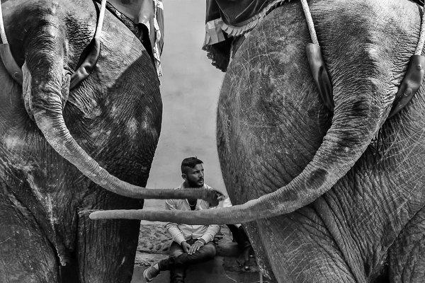 Фотограф Raj Sarkar