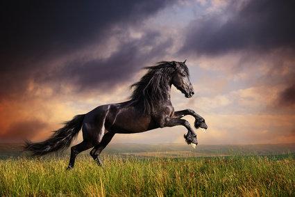 Фотоконкурс«Безграничный мир животных»