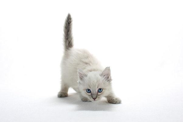 Кошачья фотография, или как получить живые и очаровательные портреты котят