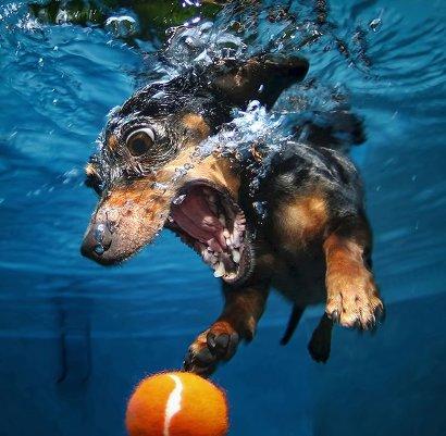 """Фотопроект """"Собаки под водой"""""""