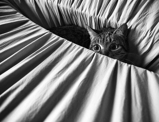 Кошачья жизнь в чёрно-белых фотографиях