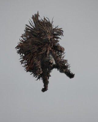 Фотографии собак в прыжке от Джулии Кристе