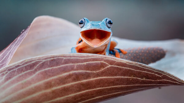 Самые крутые лягушки в мире