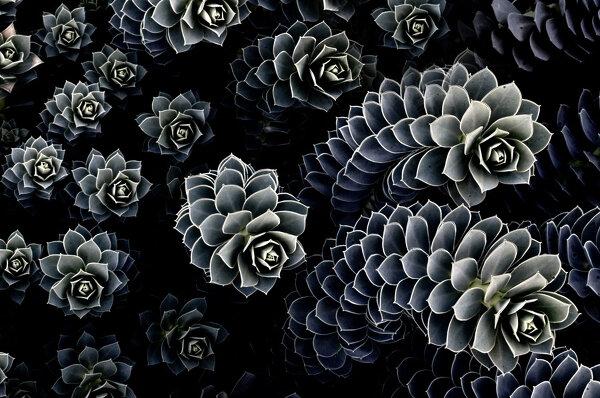 Фотографии с красивыми формами