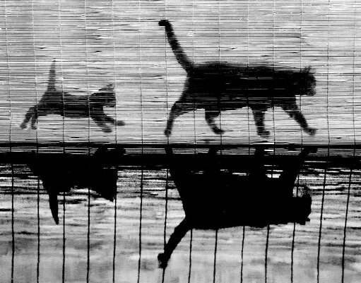 Фотограф Уолтер Чандоха