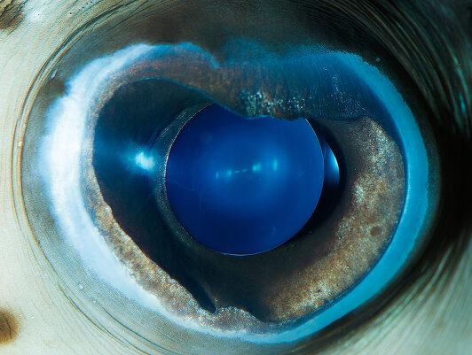 Макрофотография глаз животных
