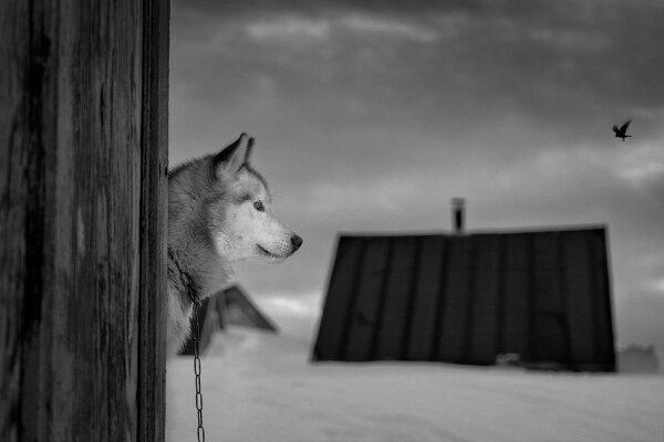 Фотограф Рагнар Аксельссон