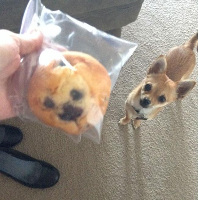 Смешные собаки скорее похожие на кого