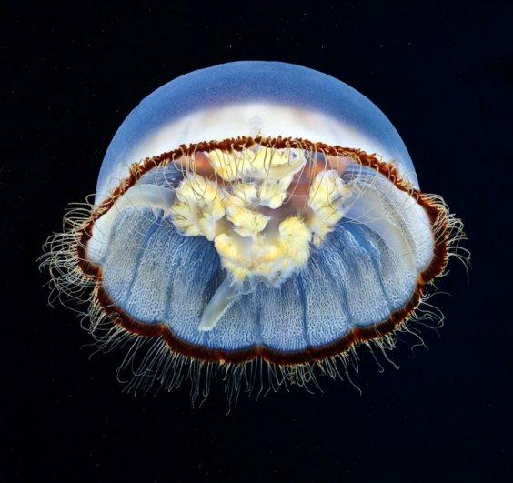 Глубины моря