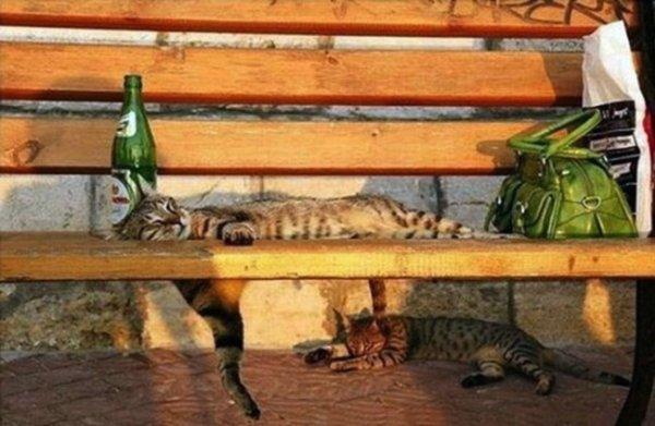 спящая кошка фото