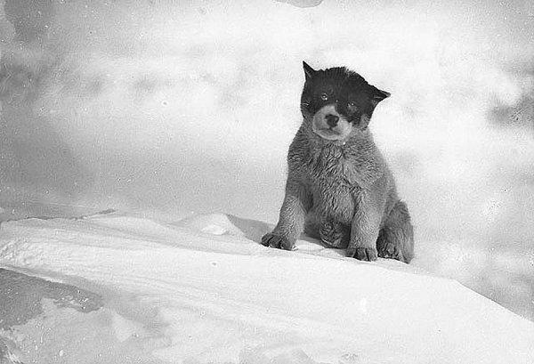 Фото Антарктиды