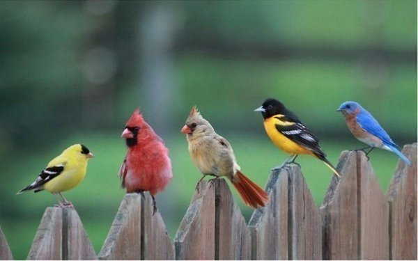 ..Angry Birds. :)