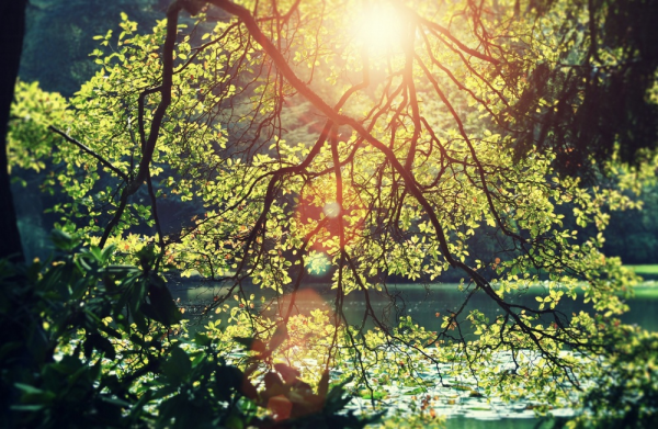 Солнечный свет