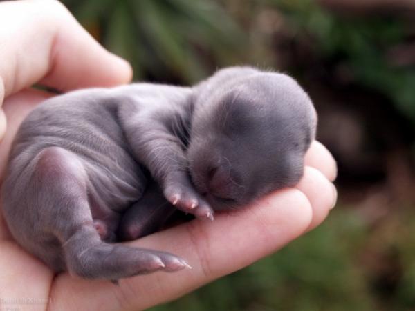Новорожденные животные