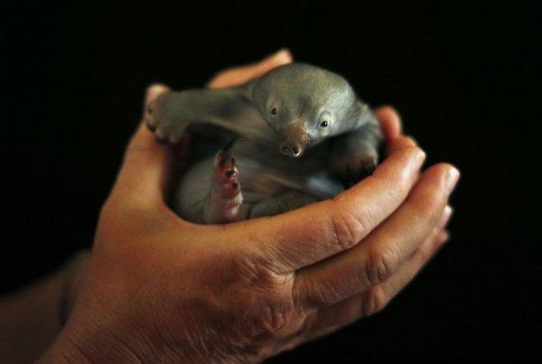 новорожденные животные фото