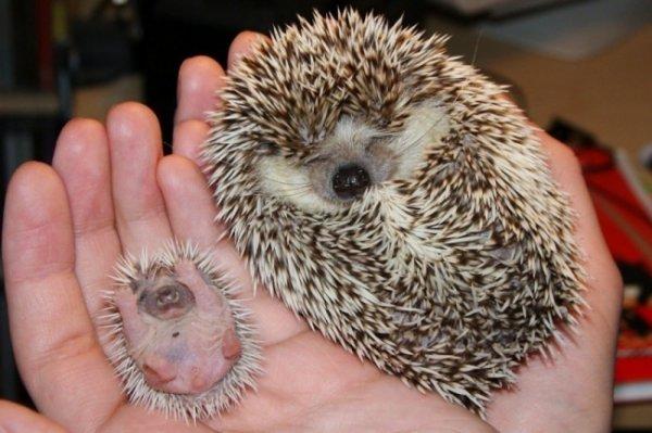 новорожденные и домашние животные