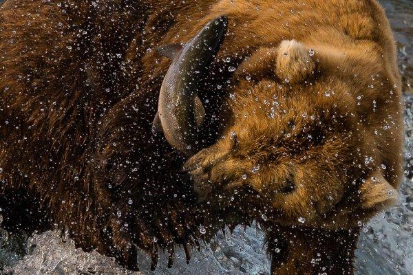 Поймал! Автор фото: Евгений Чеботарев - Удачные кадры