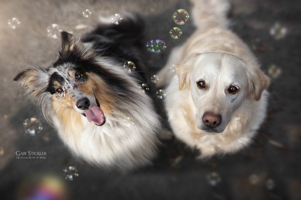 .. Как и люди — собаки тоже умеют любить, а главное - дружить..!!! :) - №1