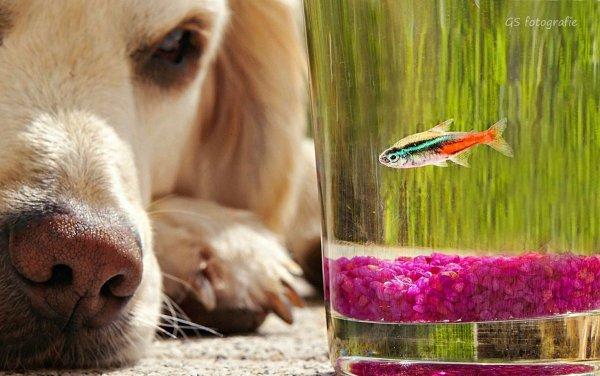 .. Как и люди — собаки тоже умеют любить, а главное - дружить..!!! :) - №9