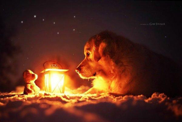 .. Как и люди — собаки тоже умеют любить, а главное - дружить..!!! :) - №13
