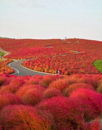© recreoviral - Краски природы
