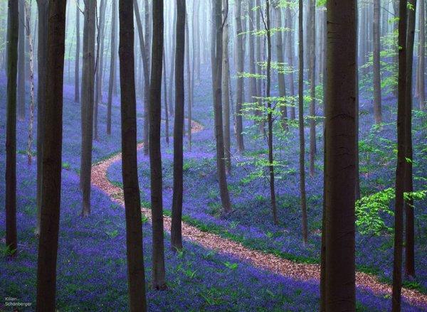 webdiscover - фото яркие краски природы