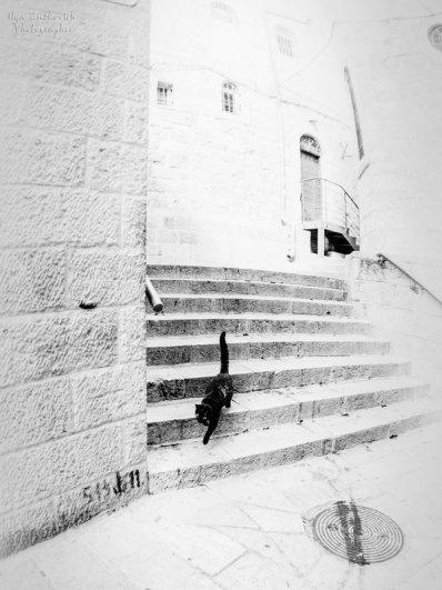 Илья Зускович - Иерусалим - серия У стены (http://fotokto.ru/id142563)