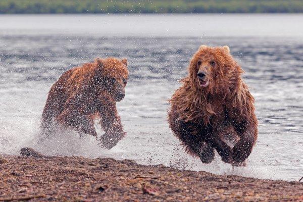 Денис Будьков - Медвежьи скачки