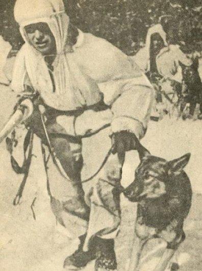 Первая в Красной Армии собака-диверсант Дина. (2)