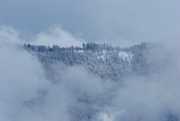 лес в облаках_copy