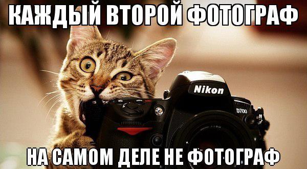 фото юмор – котики