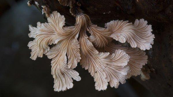 разные виды грибов на фото 9