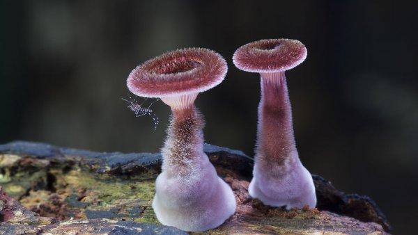 разные виды грибов на фото 13