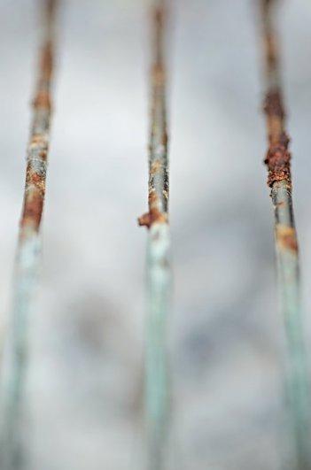 Макросъемка природы и предметов в вашем дворе. Ржавчина. Фото: Мари Гардинер