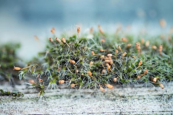 Макросъемка природы и предметов в вашем дворе. Удивительный микромир. Фото: Мари Гардинер