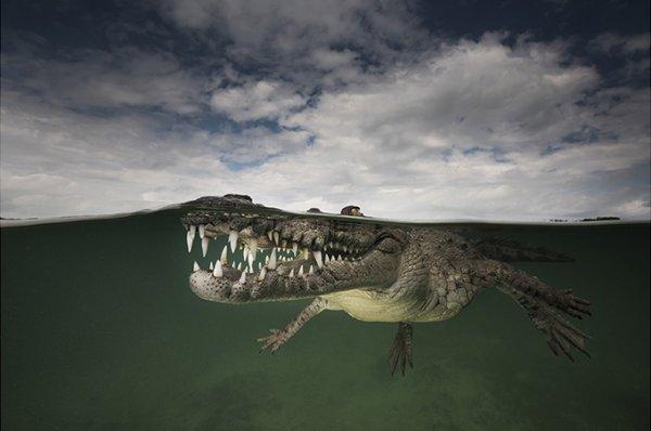 фото морских жителей 7