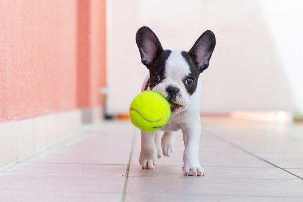 Как фотографировать щенков - №1