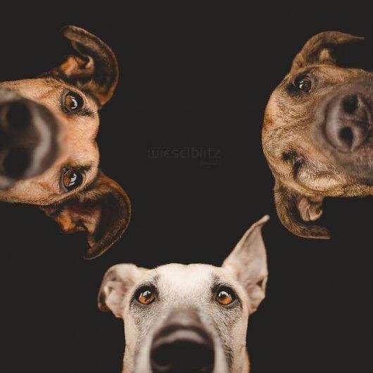 фотографии собак с друзьями