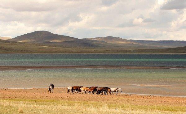 Татьяна Дубровина - Краски Монголии