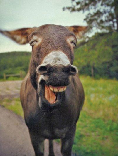 счастливые животные на фото 8