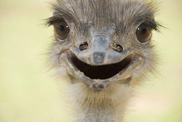 счастливые животные на фото 12