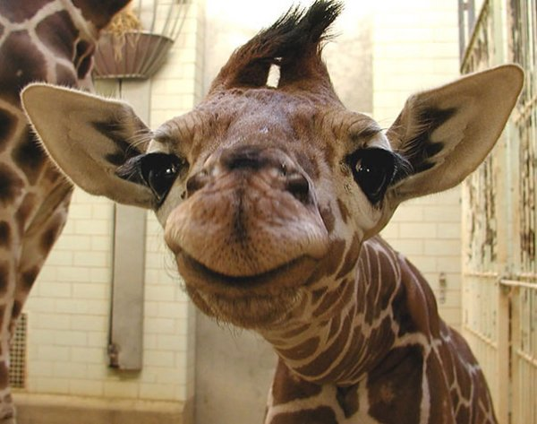 счастливые животные на фото 16