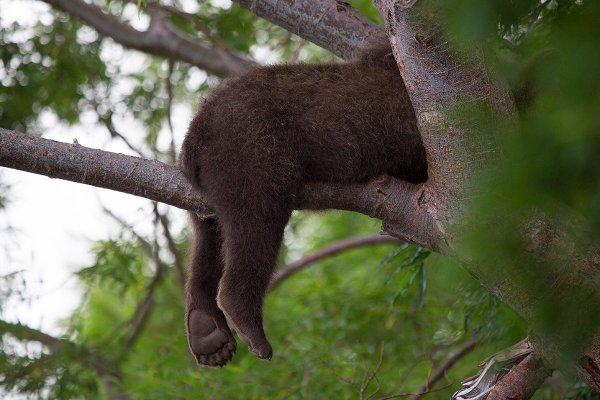 Спящие лапки. Автор фото: Денис Будьков