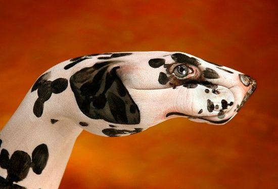 Фото животных из рук 15