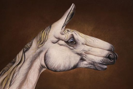 Фото животных из рук 23
