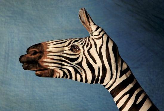 Фото животных из рук 3
