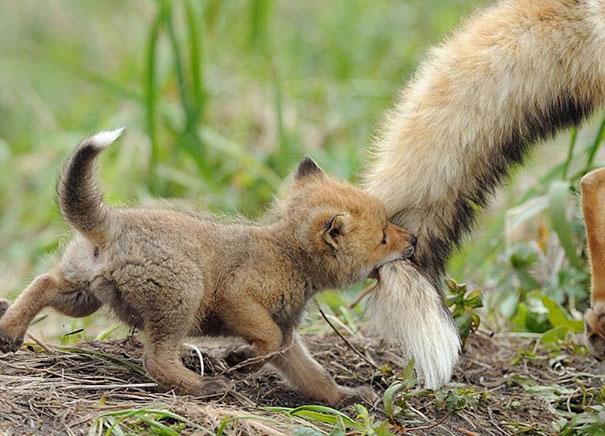 Детеныши животных – 5