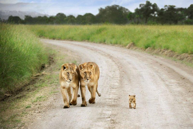 Детеныши животных – 21